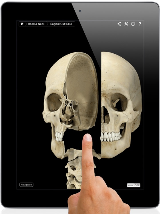 Skeleton System Pro III screenshot-0