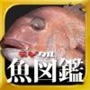 デジタル魚図鑑1000