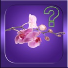 Guess it - Orchid Species icon