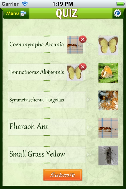 Insects Catalog