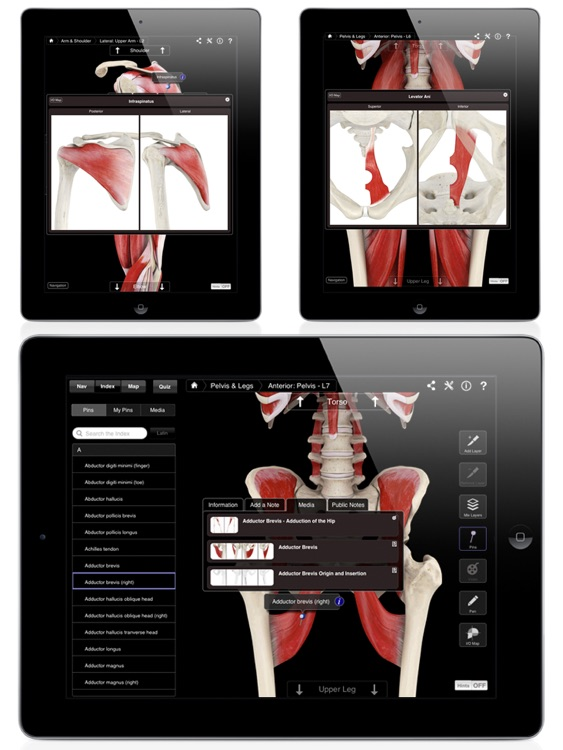 Muscle System Pro III screenshot-3