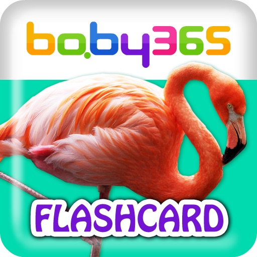 baby365-bilingual flash cards-birds and insects
