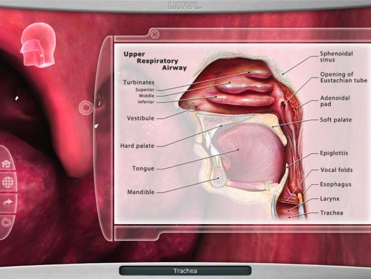 Upper Respiratory Virtual Lab screenshot-3