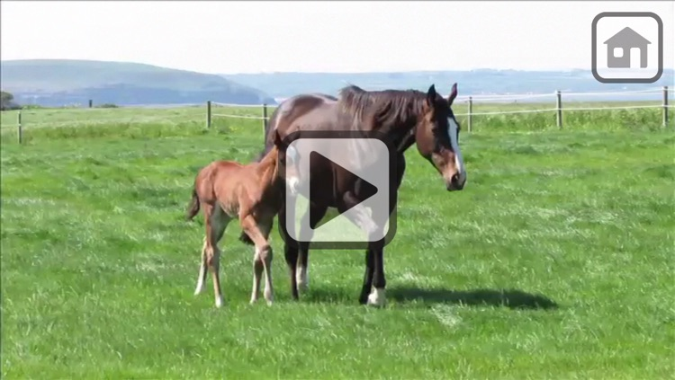100 Things: Horses – Video & Picture Book for Toddlers