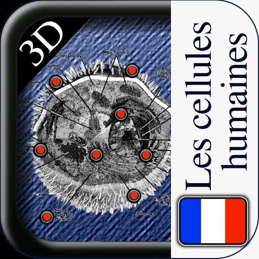 3D Les Cellules Humaines