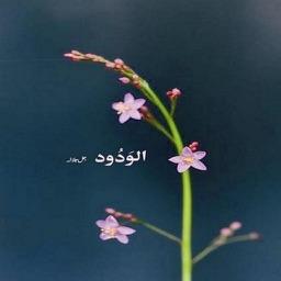 Hadeeth of Hope & Forgiveness ( Islam Quran Hadith )