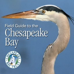 Chesapeake Bay Field Guide