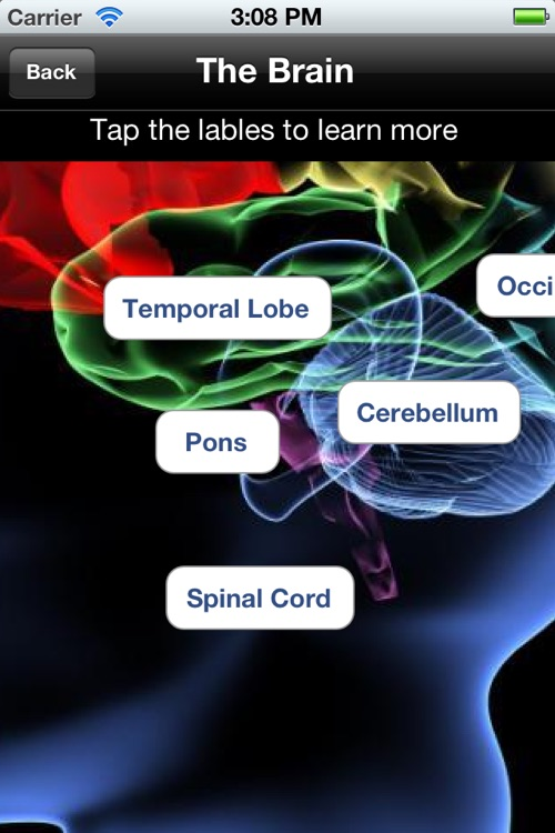 The Body - Human Anatomy Learning Tool & Quiz