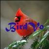 Birds Sounds App ~ BirdVo ~ Bird Voices