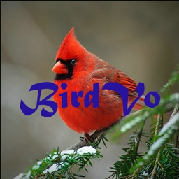 Birds Sounds App ~ BirdVo ~ Bird Voices