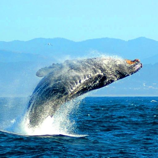 Whale Species: Giants of the Deep