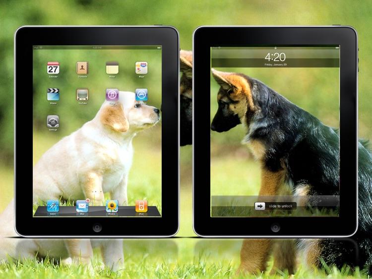 Cool Dog Wallpapers HD Lite screenshot-4