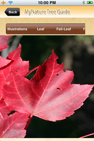 MyNature Tree Guide screenshot-3