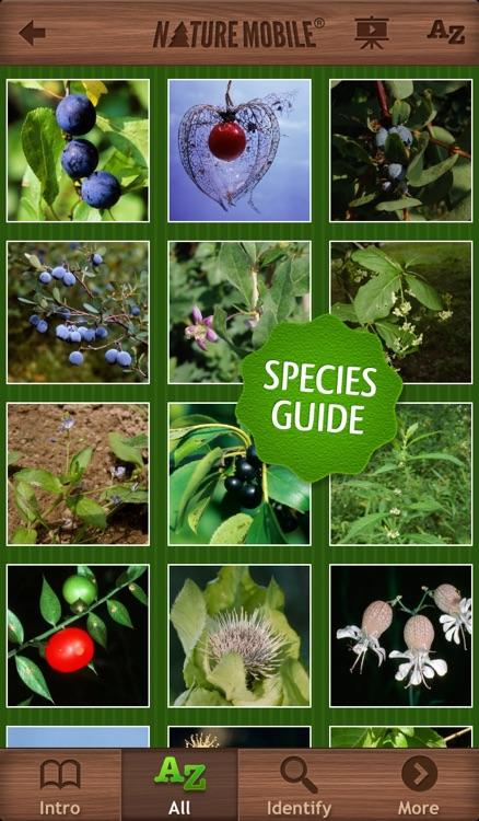 Wild Berries & Herbs - NATURE MOBILE
