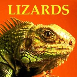 Lizards & Geckos Bible