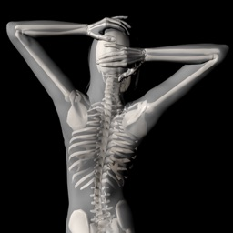 360 Anatomy for Artists - Seated Figure