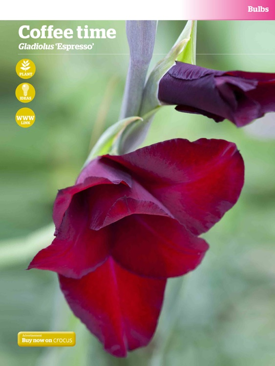 Gardeners' World Magazine - 100 Best Plants screenshot-4