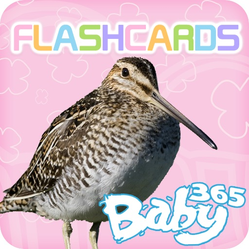 baby365-bilingual flash cards - animals (part 2)