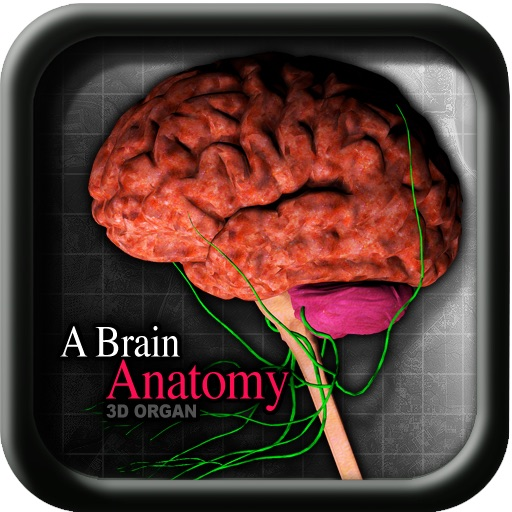 A Brain Anatomy