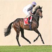 Horse Analyzer icon