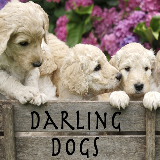 Darling Dogs