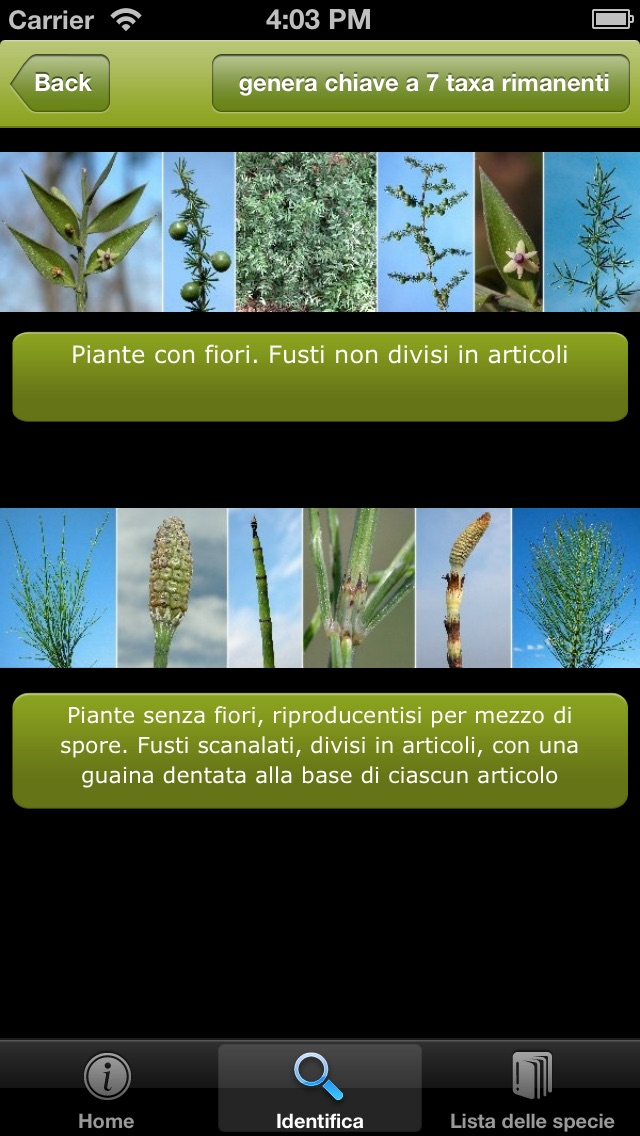 Guida alle piante del Giardino Botanico di Valbonella-2