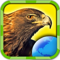 My Birds of Prey HD