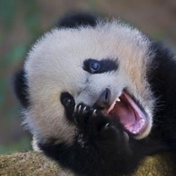 Panda Jokes - Best, cool and funny jokes!