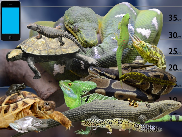 Reptile Life for Japan FREE screenshot-3