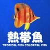 初心者の熱帯魚