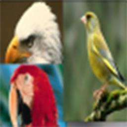 Birds Sound Effects