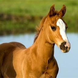 Pony Puzzle