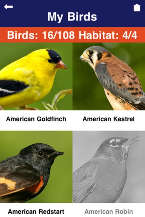 Wild About Birds! screenshot-4