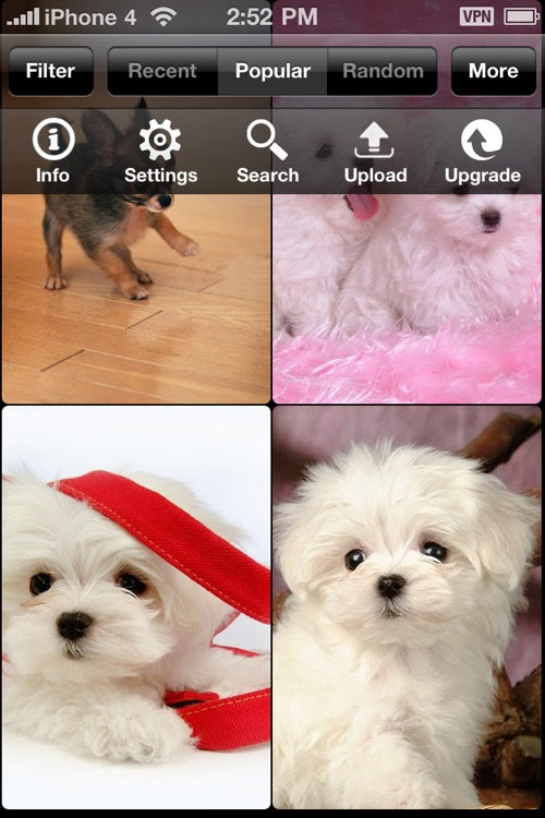 Dog pics - show your dogs and see what the world say! screenshot-3