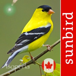 Bird Song Id Canada Automatic Recognition and Reference of Songs and Calls of Canadian Birds
