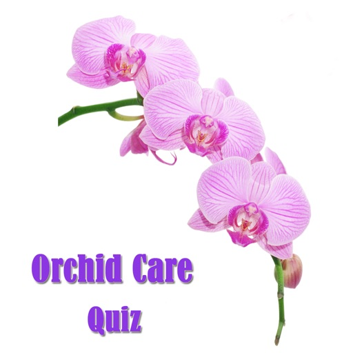 Orchid Care Quiz