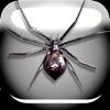 クモのいたずら無料版