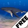 Humpback Whale Free
