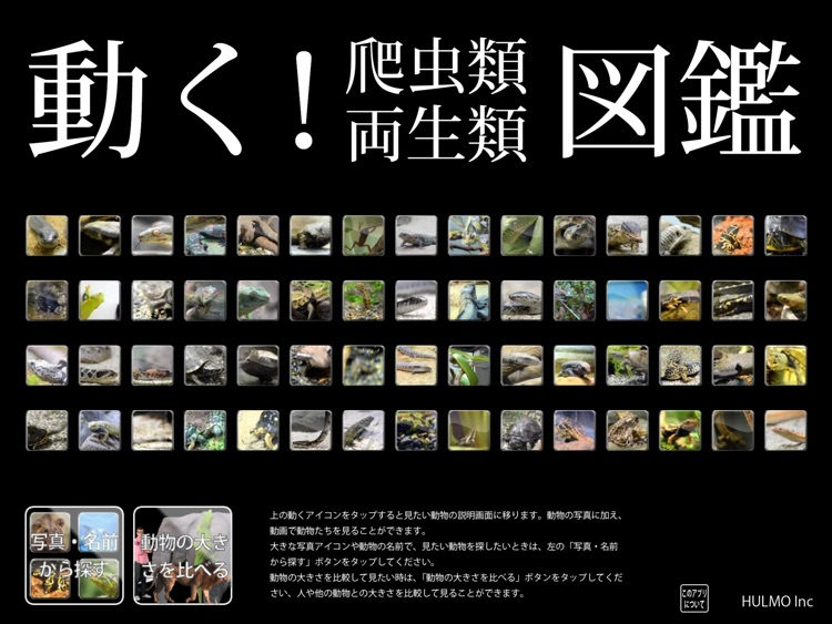 Reptile Life for Japan