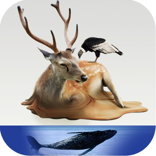 Atlas: Birds, Sea Animals and Animals