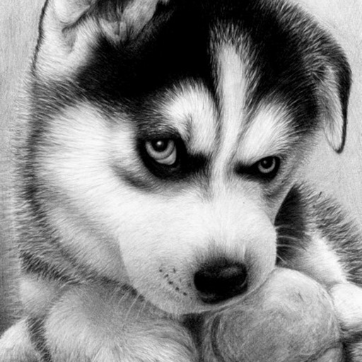 dogs screen Wallpapers