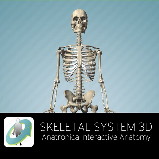 Skeletal System 3D - Anatronica Interactive Anatomy