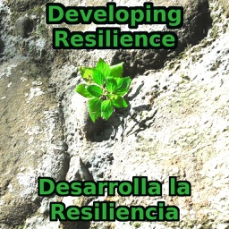 Develop Your Resilience