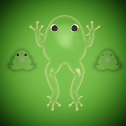 Breeding Guide for Pocket Frogs