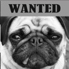 개찾사 – Dog Finder