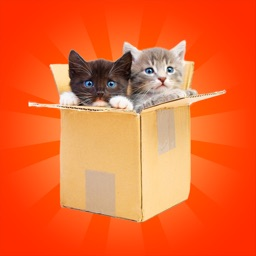 Cats & Kittens Memory for kids and toddlers