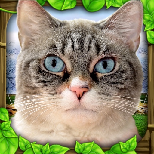 Stray Cat Simulator icon