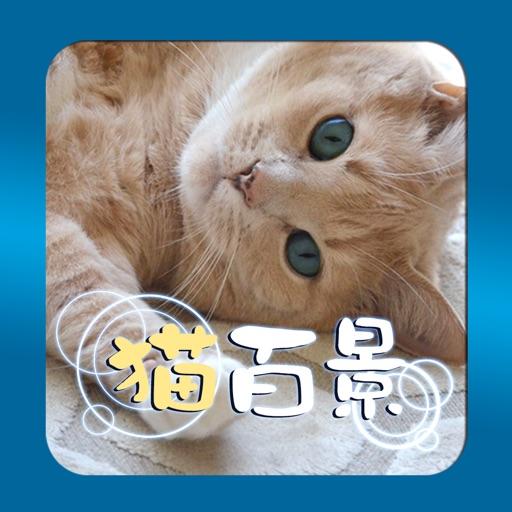 アハ体験~猫のいる風景