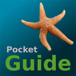 Pocket Guide UK Seashore