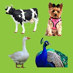 Animal Sounds Quiz For Kids